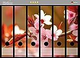 Wallario Ordnerrücken Sticker Frühlingsgefühle II - Kirschblüten in Nahaufnahme in Premiumqualität - Größe 36 x 30 cm, passend für 6 breite Ordnerrücken