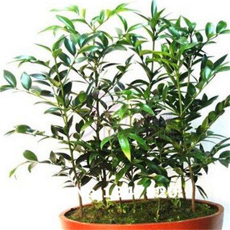 Graines de bambou rares, 10 sortes 50 Couleurs Mix Graines de fleurs, le taux élevé de survie pour la maison et le jardin.