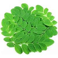 Asklepios-seeds® - 100 Semillas de Moringa Oleifera moringa, ben