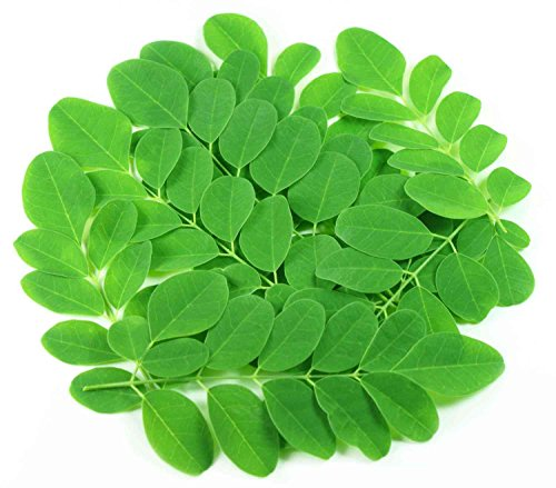 Asklepios-seeds® - 100 Semi di Moringa oleifera, Syn. pterygosperma / aptera
