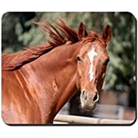 Cafepress – Red Chestnut Horse – Gomma antiscivolo mouse, Gaming Mouse (Hunter Jumper Regali)