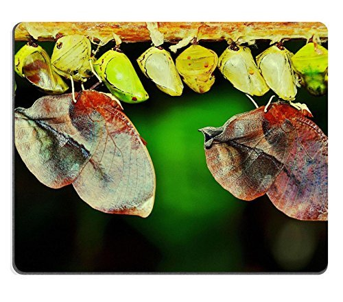 larve-di-insetti-macro-nature-parides-iphidamas-qzone-customized-made-to-order-cloth-with-neoprene-r