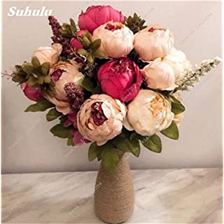 Hot Sale 10 Pcs/bag Peony Flower Seeds Garden Seeds And Potted Plants Indoor Bonsai Peony Seeds for Home Garden Easy to Grow 1