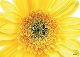 Tischsets Platzsets abwaschbar Sunny von ARTIPICS 4er-Set Platzdeckchen Kunststoff 42x30 cm Sommer-Tischdeko sonnengelb