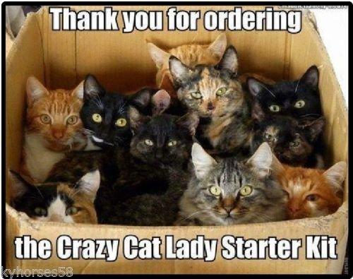 funny-crazy-cat-lady-starter-kit-fridge-magnet