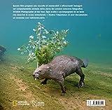 Incredibili-comportamenti-Insolite-storie-del-mondo-animale-Ediz-a-colori