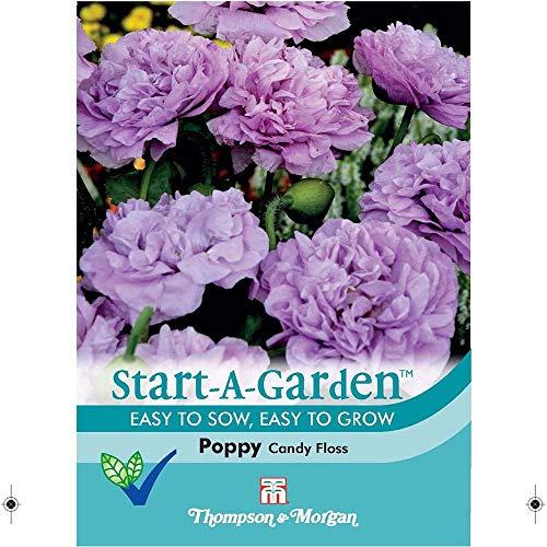 Thompson & Morgan start-a-garden Blume Poppy Candy Floss 150 Samen (Floß Blume)