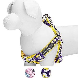 Blueberry Pet, Motifs Paquerette ou Roses Ultra doux, Néoprène, rembourré, harnais chien, Collier assorti vendu séparément.
