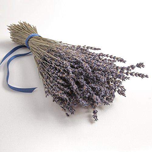 ROSEMARIE SCHULZ Heidelberg Lavendel getrocknet Lavendelblüten aus der Provence Lavendelstrauß Lavendelbund mit ca. 300 Stengel Trockenblumen -