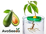 Avoseedo – Grow Your Own Avocado Tree, kit per coltivare il tuo albero di avocado