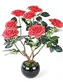 Swiftt 50 Blumensamen Edelrose Rosensamen Regenbogen Rose Bunte Blumen Samen Bonsai für Ihr Garten Balkon Lange Blütezeit