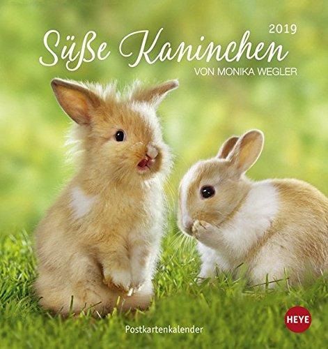 Süße Kaninchen Postkartenkalender - Kalender 2019