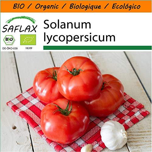 SAFLAX - Garden in the Bag - BIO - Tomate - Saint Pierre - 15 Samen - Mit Anzuchtsubstrat im praktischen, selbst aufstellenden Beutel - Solanum lycopersicum