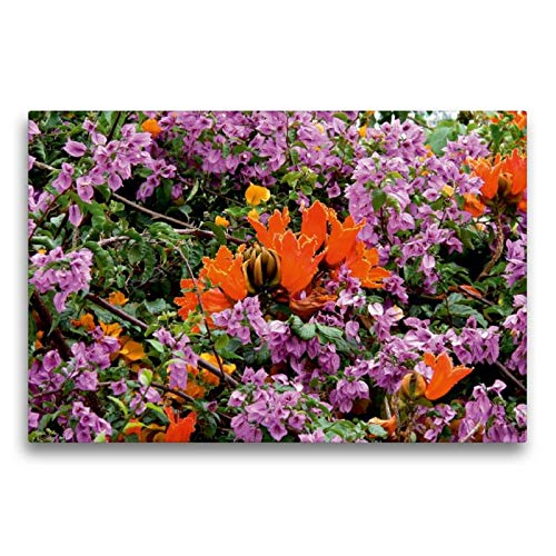 Calvendo Premium Textil-Leinwand 75 cm x 50 cm quer, Afrikanischer Tulpenbaum (Spathodea campanulata) | Wandbild, Bild auf Keilrahmen, Fertigbild auf echter Leinwand, Leinwanddruck Natur Natur