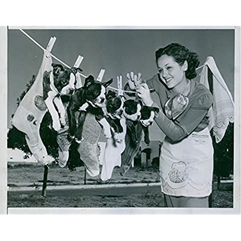 Vintage photo de Miss Nicky Flanagan cuelga estos cachorros en la línea después de un buen Champú.