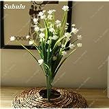 100 PC / bolso 100% verdad Semillas Europa Primula acaulis Primrose interior Semillas de flor de Bonsai para la absorción de la radiación 6 Inicio Jardín