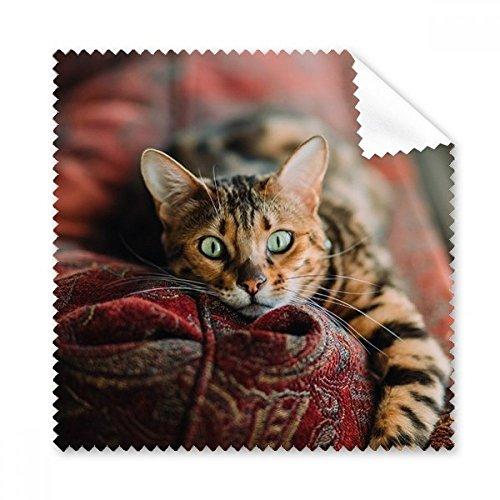 Cat Eye Objektiv - Animal Eye Cat Foto Gläser Grün