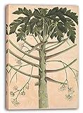 Printed Paintings Leinwand (40x60cm): Illustrierte Einzelarbeit - Männlicher Papaya-Baum