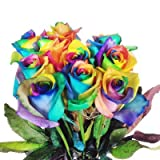 Bunte Blumen: 10x Echte Regenbogen Rosen, bunt - langstielig und vasenfertig