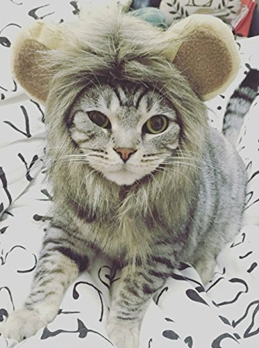 Midmade Lovely Attractive Cute Pet Cat Dog Hat Wig Dress Up with Ears