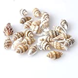 100 conchas de mar con agujero bisuteria manualidades y decoracion acuario peceras botellas baños...