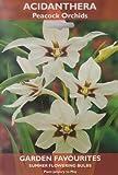 Acidanthera–Paon Orchidées–Fleurs d'été Ampoules