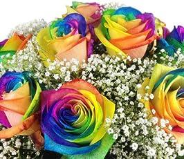 Bunter Blumenstrauß mit 10 Regenbogenrosen - Echte bunte Rosen