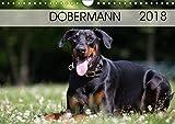 Dobermann 2018 (Wandkalender 2018 DIN A4 quer): Eleganz auf 4 Pfoten (Monatskalender, 14 Seiten ) (CALVENDO Tiere) [Kalender] [Apr 01, 2017] Mirsberger www.tierpfoto.de, Annett