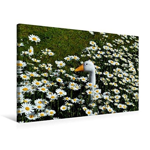 Premium Textil-Leinwand 75 cm x 50 cm quer, Der Vergleich | Wandbild, Bild auf Keilrahmen, Fertigbild auf echter Leinwand, Leinwanddruck (CALVENDO Glaube)