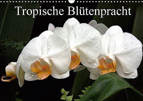 Tropische Blütenpracht (Wandkalender 2017 DIN A3 quer): Die schönsten Blüten aus den Tropen. (Monatskalender, 14 Seiten ) (CALVENDO Natur)