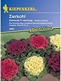 Brassica oleracea Zierkohl gekrauste Mischung