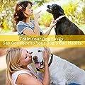 HVRSTVILL Anti Barking Dog Collar, Stop Barking Device for Small Medium Large Dogs, NO SHOCK Safely and Humane with Sound & Vibration, Rechargeable No Bark Dog Training Collar, Adjustable Belt 7-55kg from HVRSTVILL