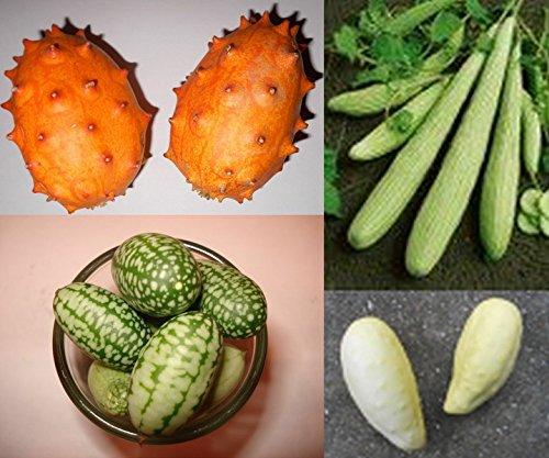 Super Gurken-Samen Mix ***Top Ertrag , Riesige , Kleine und Seltene Gurkensorten***