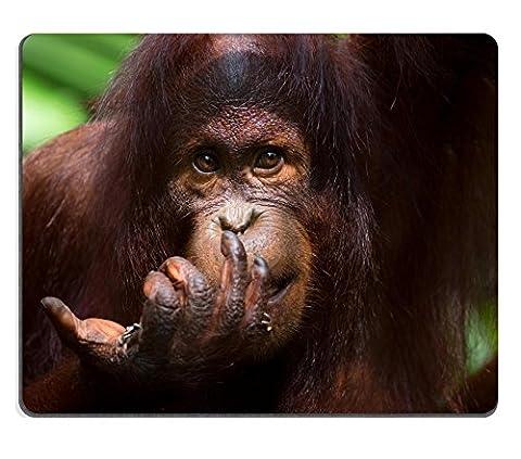 MSD Natural Rubber Gaming Mousepad IMAGE ID: 35042424 Orangutan in the jungle of Borneo Malaysia (Jungle Orangutan)