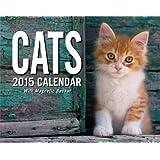 Cats 2015 Day-to-Day Mini Box Calendar