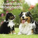 Australian Shepherds 2019 Calendar