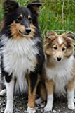 Cute Mom and Baby Collie Dogs Journal: 150 Page Lined Notebook/Diary