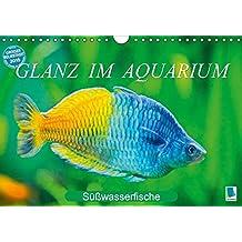 Glanz im Aquarium: Süßwasserfische (Wandkalender 2016 DIN A4 quer): Aquarium: Prachtregenbogenfisch, Marmorskalar & Co. (Monatskalender, 14 Seiten) (CALVENDO Tiere)