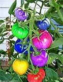 Best Tomato Plants - Catterpillar Farm Rare Dwarf Rainbow Tomato 30 Seeds Review