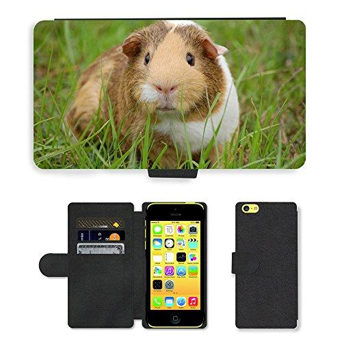 Just Mobile pour Hot Style Téléphone portable étui portefeuille en cuir PU avec fente pour carte//m00139294Cochon Guinée Rongeur Pet Rupestris//Apple iPhone 5C