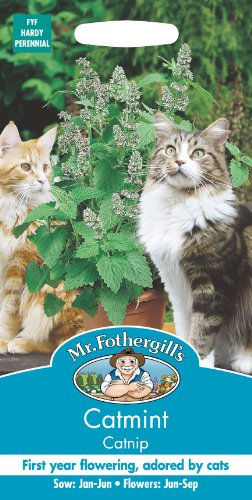 mr-fothergills-pictorial-packet-herb-nepata-catmint-catnip-250-seeds