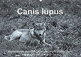 Canis lupus (Wandkalender 2020 DIN A2 quer): Impressionen in schwarz-weiss aus dem Leben der Wölfe (Monatskalender, 14 Seiten ) (CALVENDO Tiere)