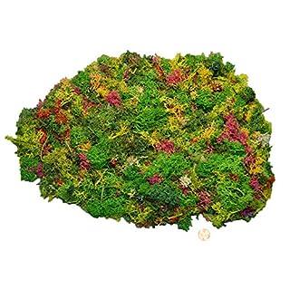 Muwse Island-moos W 200g buntes Märchen-Wald Sortiment Hand-gerupft, präpariert, gefärbt, weich, leicht, lichtecht, haltbar. Deko-moos Floristik-moos Bastel-moos Dekomaterial Zubehör