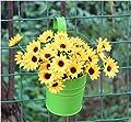 10 Stück / 10 Farben Hängetöpfe set Blumentöpfe (mit Haken) Pflanztopf verschiedene Farben für Balkon metall hängend auf Fenster Garten von QUMAO bei Du und dein Garten