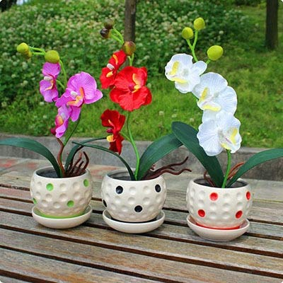 Pinkdose Pinkphalaenopsisorchidflowerindoorbonsaiorchids100Particles / Lot: Prune