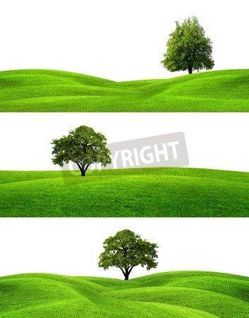 """Poster-Bild 60 x 80 cm: """"Green Banners"""", Bild auf Poster"""