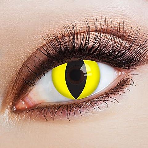 aricona Farblinsen Farbige Katzenaugen Kontaktlinsen Glowing Cat-Deckende Jahreslinsen für dunkle und helle Augenfarben ohne Stärke,Farblinsen für Karneval,Fasching,Motto-Partys und Halloween (Cats Musical Halloween Kostüme)