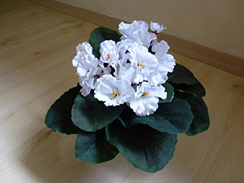 usambaraveilchen-kunst-seidenpflanze-creme
