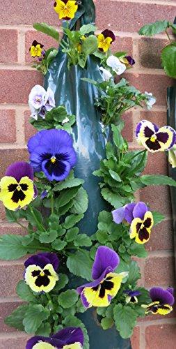 Planteurs Flower Fraise à suspendre pour 12 dos-bagagerie Petit Offre
