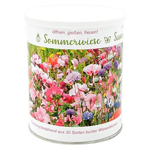 Sommerwiese enthält 30 verschiedene Wildblumenarten sowie Grassamen - Anzuchtset mit 30 Sorten eine...